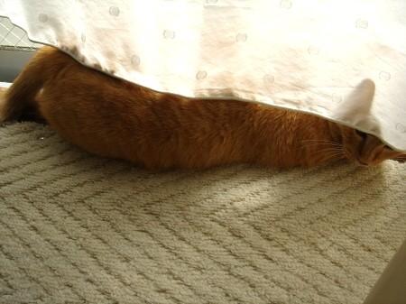 毛皮を洗濯した猫 (12)