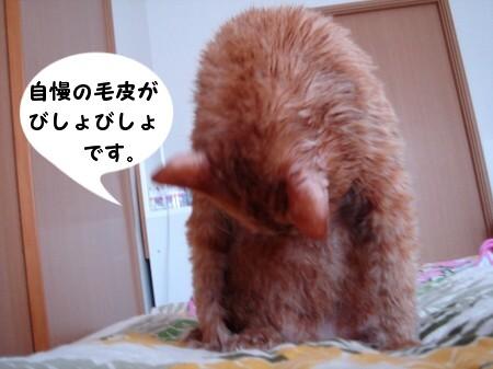 毛皮を洗濯した猫 (3)
