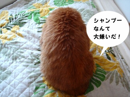 毛皮を洗濯した猫 (4)