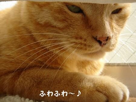 毛皮を洗濯した猫