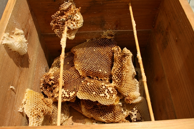 s-蜂の巣が・・・・・ 004