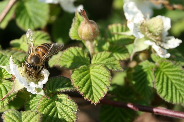 発見!!蜜蜂 004