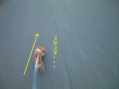 A08.5.21リズムスピード散歩 006