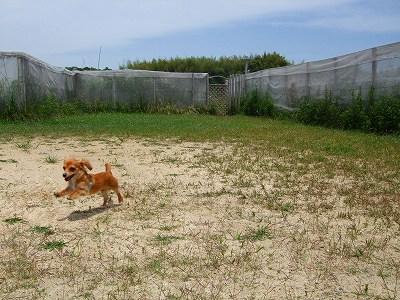 Aリズムの飛行犬