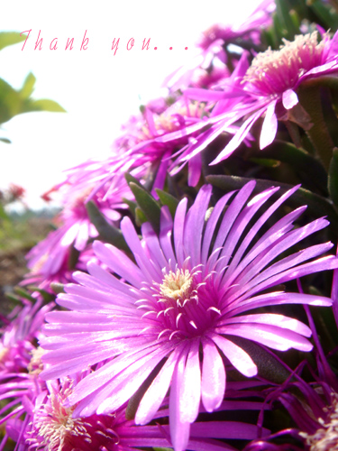 紫のお花。