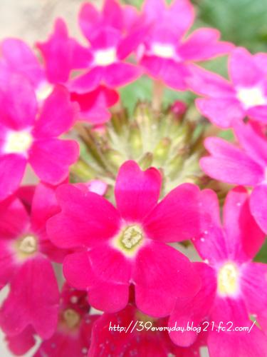 小さい赤いお花