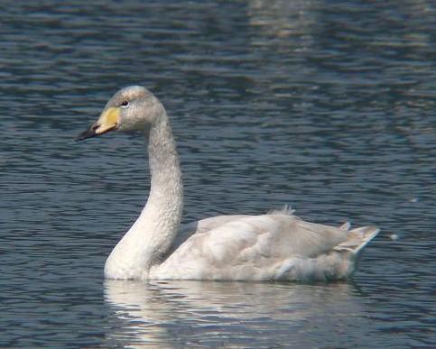 幼鳥 236
