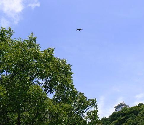blog用,飛翔072