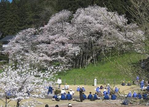臥龍桜全景 046