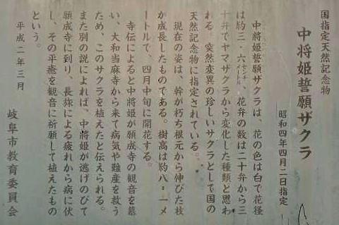 中将姫桜看板 040