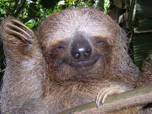 sloth_04.jpg