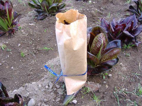 春イタリア野菜4