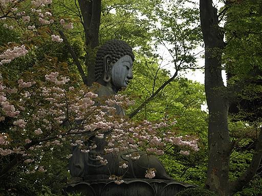 大仏と八重桜