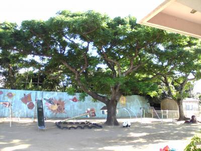 保育所の木