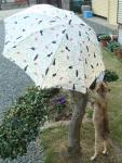 傘とニャー