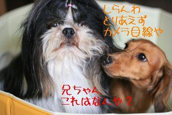 IMG_4322.jpg