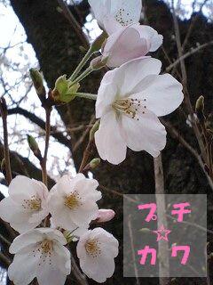 netaga_0331-02.jpg