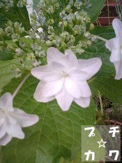 netaga_0605-01.jpg