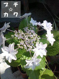 netaga_0611-01.jpg