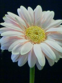 20080308-NEC_0015.jpg