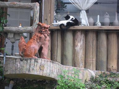 シーサー猫