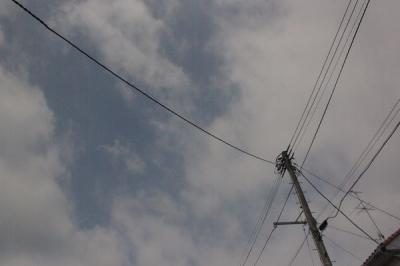 20080811_denki_02.jpg