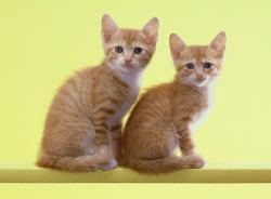 2匹の猫がこちらを見ている