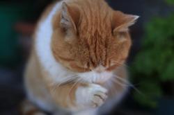 猫(ネコ)