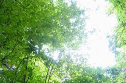 森林・新緑
