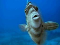 魚・海中生物