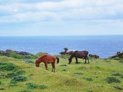 海と草原と馬