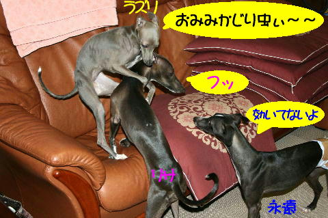 IMG_13_20080625212405.jpg