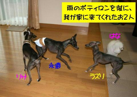 IMG_1_20080625212257.jpg