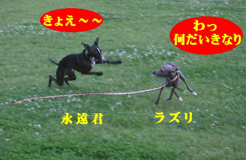 IMG_2_20080616125601.jpg