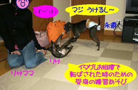 IMG_7_20080625212334.jpg
