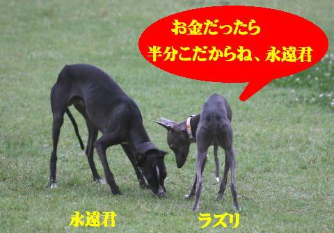 IMG_9151_20080616132708.jpg