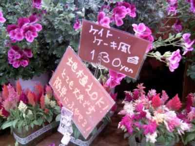 0805syokubutu01.jpg