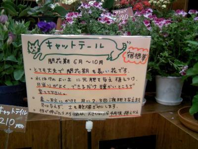 0805syokubutu03.jpg
