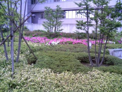 0805tsutsuji01.jpg