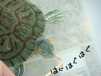 2008・3・20かめ4