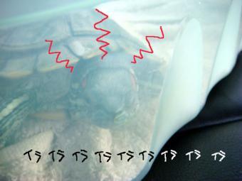 2008・7・3かめ8