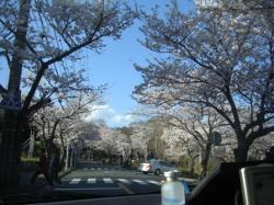 080401 桜トンネル3