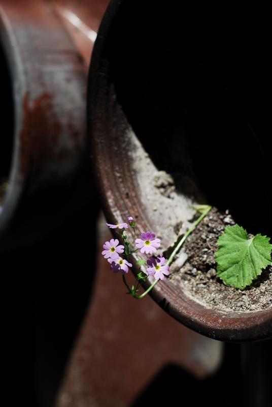 土管の小さなお花