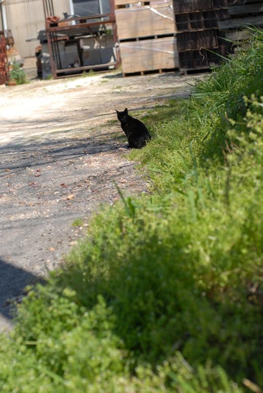 黒猫の・・・♪♪♪