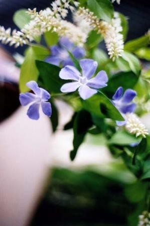花びら5枚