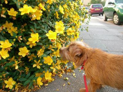 黄色い花はいい香り