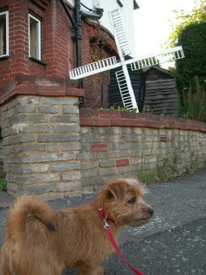 近所の風車付きの家