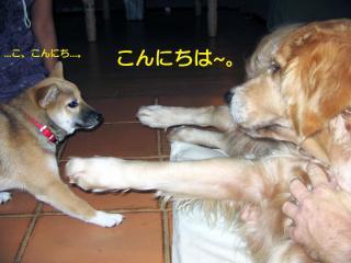 IMG_3549_convert_20080422131635.jpg