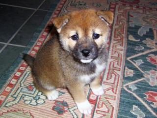 puppy_convert_20080429033843.jpg