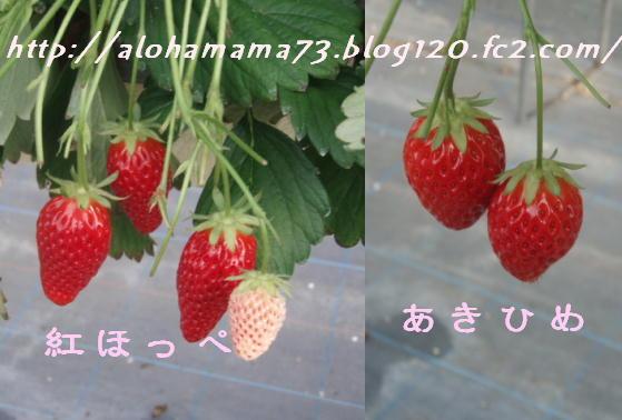 20080323231950.jpg
